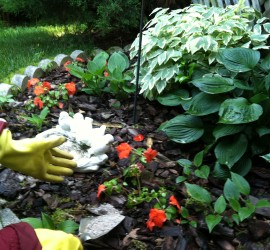 Fertilizing Impatiens how to garden beginner gardener