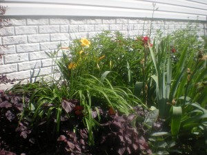 Side Garden (Tea Groundcover, Lillies, Milkweed Bush, Irises, Roses, Golden Yarrow)