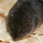 6 Ways Voles/Moles Damage #Lawn & #Garden! #vole