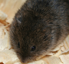 Vole how to garden beginner gardener