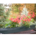 5 Ways to Let #Nature Absorb Your #Stress … #stressrelief
