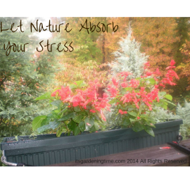 Let Nature Absorb Your Stress how to garden beginner gardener