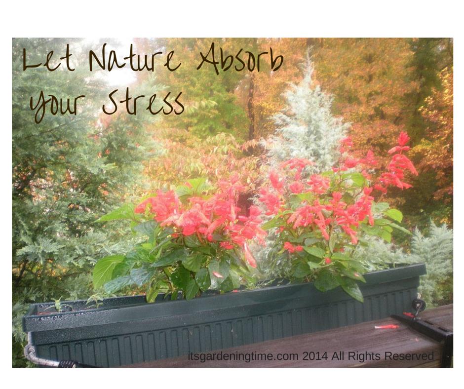Let Nature Absorb Your Stress how to garden beginner gardener