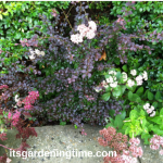 3-n-1 Combo of #Sedum #Barberry & #Azaleas! #autumn