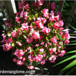 How to #Plant #Flowers in #Container! #containergardening