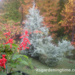6 Reasons to #Plant #Evergreens in #Autumn #Landscape!