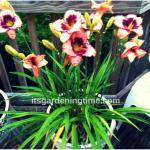 Turn Plain Deck/Patio Into #Garden Oasis! #gardening