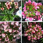 Deck/Patio #Garden for a #GardenParty! #lilies #begonias #geranium
