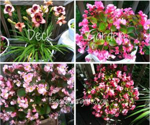Deck Garden Container Plants