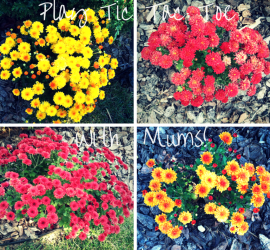 Play Tic Tac Toe with Mums! how to garden beginner gardener