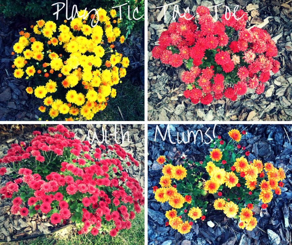 Play Tic Tac Toe with Mums! how to garden beginner gardener