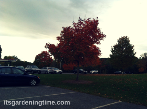 A Fall Afternoon at Black Hill Regional Park/Seneca Lake