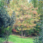 4 Ways Oak #Trees Add Value to #Landscape! #landscaping