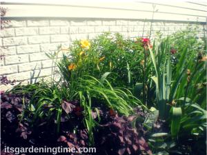 "Side Garden (Burgundy Tea Herb, Yellow Lillies, Milkweed Bush, ""Sonata in Blue"" Bearded Iris, Red Roses, Golden Yarrow)"
