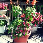 #Organic Solution for Powdery Mildew! #garden #gardening