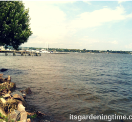 Historic Havre de Grace, Maryland how to garden beginner gardener