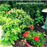 Front Sidewalk #Garden is #LowMaintenance! #gardening