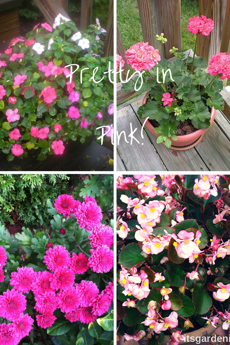 Pretty in Pink! how to garden beginner gardener