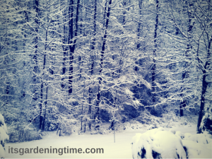 Winter White!