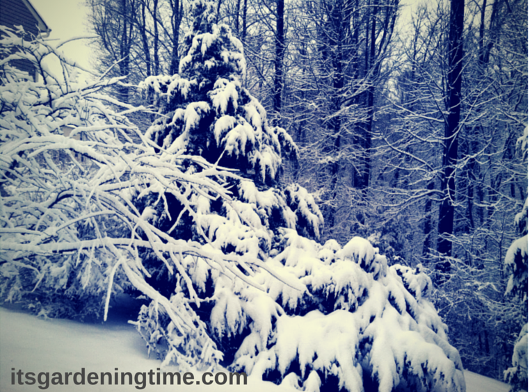 Winter Wonderland! how to garden beginner gardener