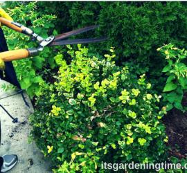 It's Time to Prune! how to garden beginner gardener