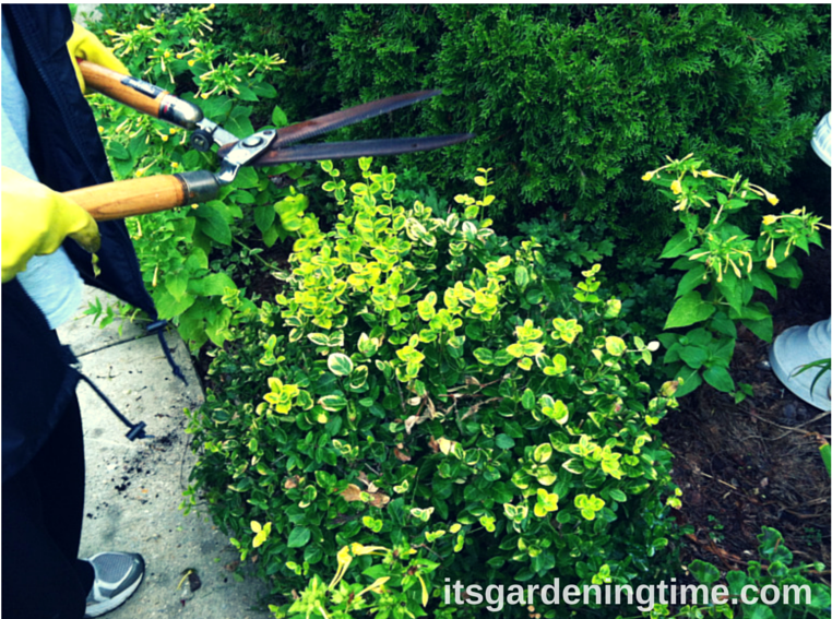 It's Time to Prune! how to garden beginner gardener