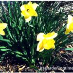 Countdown 2 #Spring! #flowers #flower #flowerpower