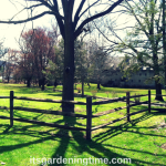 6 Reasons to #Grow #Trees in #Landscape! #treelover