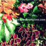 3 Gorgeous #MyrtleBeach #Gardens! #gardening #garden