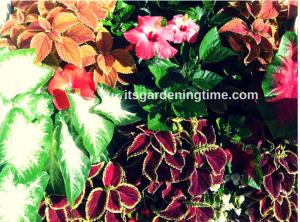 Myrtle Beach Flora beginner gardener how to garden