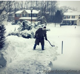 #Blizzard2016! #Jonas2016 #JonasBlizzard #thewinterawakens beginner gardener how to garden