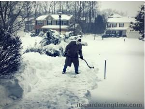 #Blizzard2016! #Jonas2016 #JonasBlizzard #thewinterawakens beginner gardener how to garden