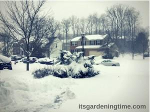 #Blizzard2016! beginner gardener how to garden