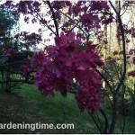 #Crabapple #Tree #Flowers in Early #Spring! #pinkflowers