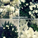 #White #Flowers Cool Your #Garden! #gardens