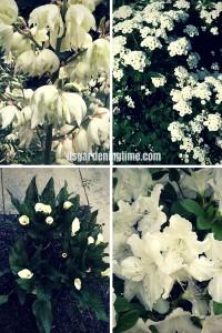 White Flowers Cool Your Garden! beginner gardener how to garden