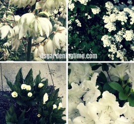 White Flowers Cool Your Garden! beginner gardener how to garden