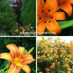 #orangeflowersarethebest #orangeflowers #flowers #flowerpower