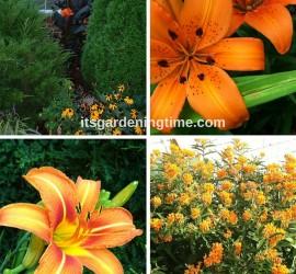 #orangeflowersarethebest beginner gardener how to garden