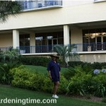 #Garden Respite in the Midst of #Tropical #Heat! #gardens