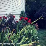 Gorgeous Side #Garden Stands Up & Greets U! #gardening