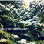 Dusting of #Snow Creates #WinterWonderland! #evergreens #landscape