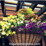 4 Huge Hanging Baskets! #container #containergarden