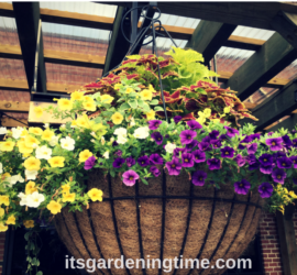 Huge Hanging Baskets/Container Gardens how to garden beginner gardener beginner gardening container gardener container gardening