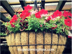 4 Huge Hanging Baskets how to garden beginner gardener beginner gardening container gardener container gardening