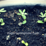 How to #Grow From #Seeds! #seed #flower #flowers