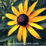 #1 Maintenance-Free #Perennial in #MidAtlantic is …