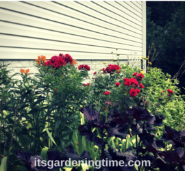 Summer Parade of Gorgeous Flowers! how to garden beginner gardener beginner gardening